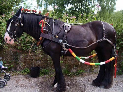 Horse drawn boat trips at Cromford Canal with Chelsea