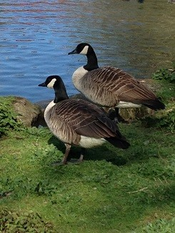 Education packages and prices - geese